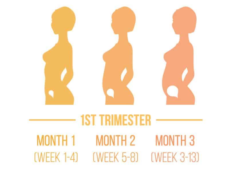 Pregnancy Trimester