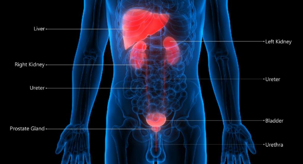 Urothelial Carcinoma